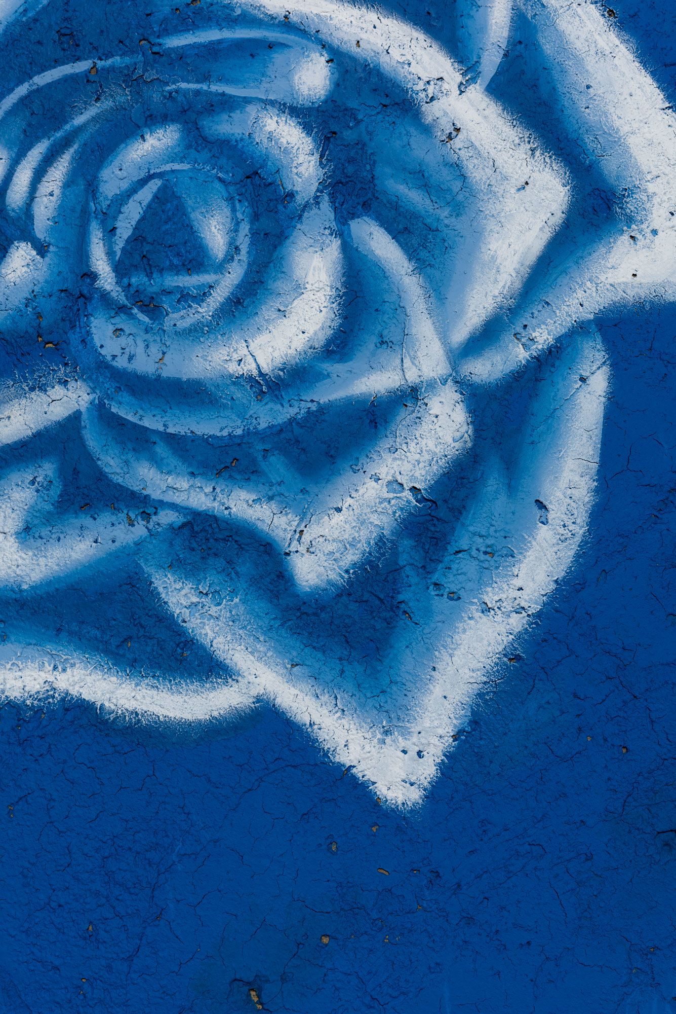 rafa esparza, starshots: blue roses, 2019-20
