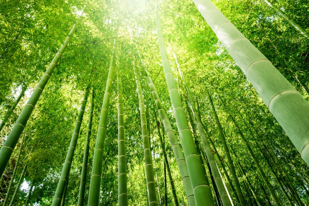 Manx court replaces liquidator at creditors' request in bamboo fund winding-up