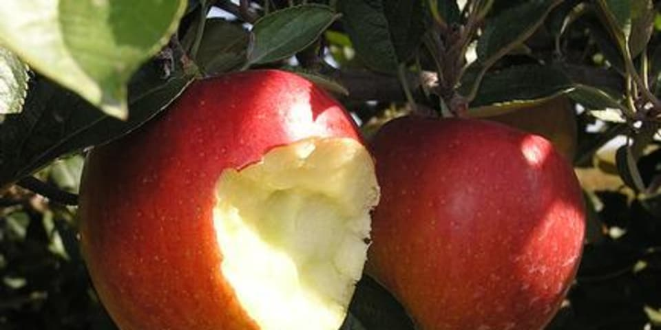Seventh Circuit stops 'second bite at the apple'
