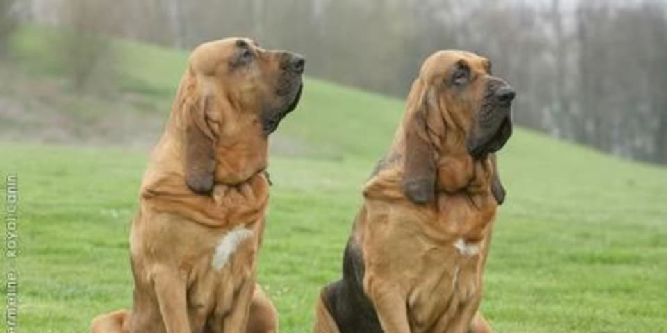 Arbitrators and corruption: watchdogs or bloodhounds?
