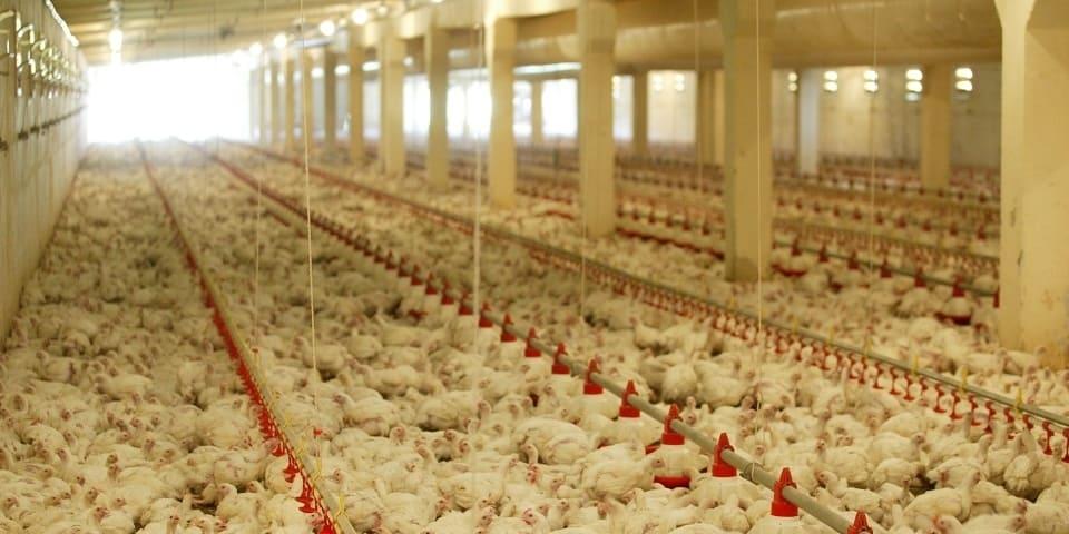 USDA rule repeal sparks debate