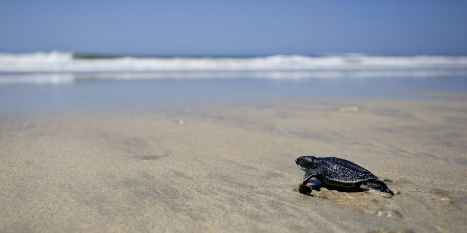 Costa Rica narrows claim over turtle sanctuary