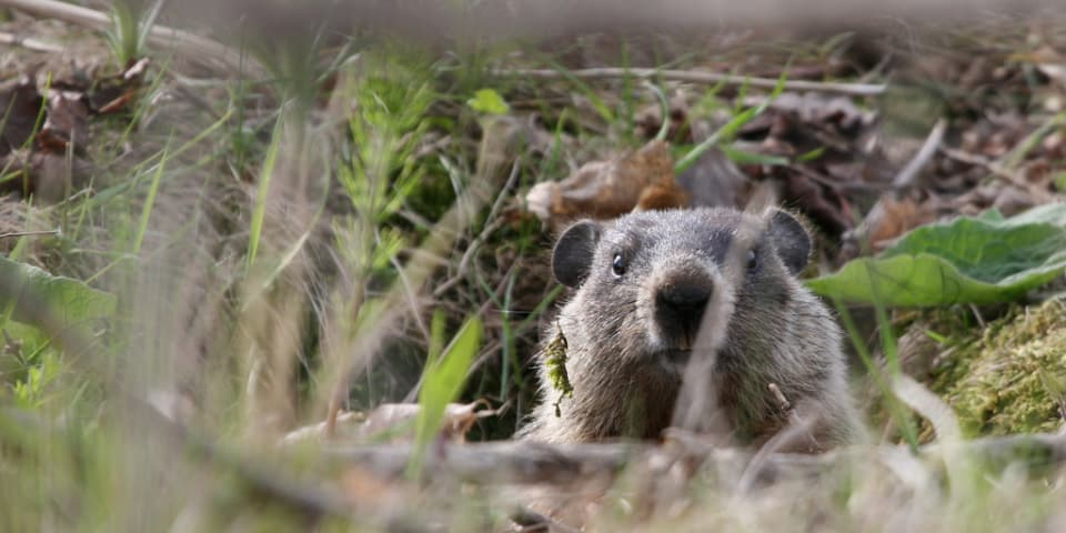 Stuck in an arbitral Groundhog Day