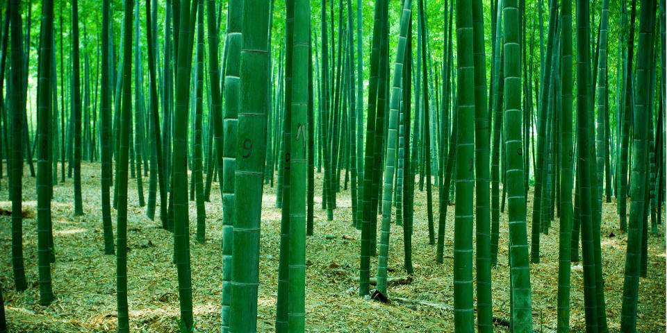 International bamboo fund wound up in Isle of Man