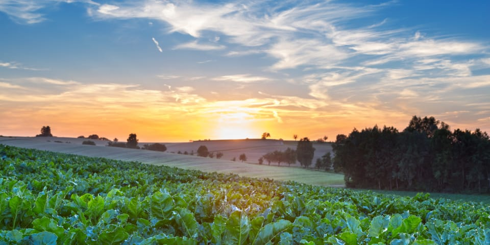 France accepts commitments from sugar beet society