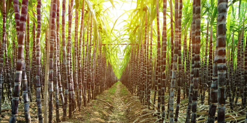 Tanzania faces ICSID claim after sugar project goes sour
