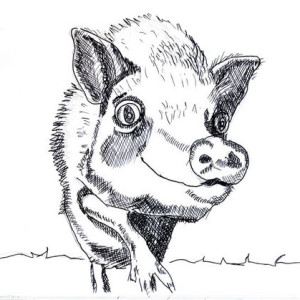 Funky Pig - Pen Drawing