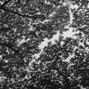Tree Motif - Photography