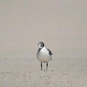 Bird Feeling Down - Photography
