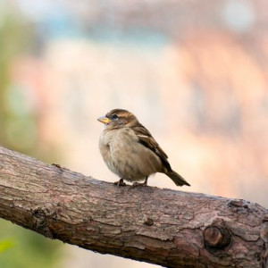 Sweet Bird in Van Vorst Park - Photography