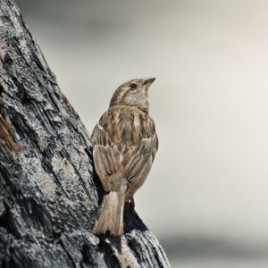 Pondering Bird on the Big Island - Photography