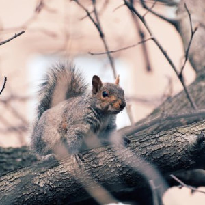 Squirrel in Van Vorst Park 1 - Photography