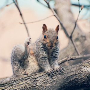 Squirrel in Van Vorst Park 2 - Photography