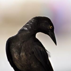 Watercolor Bird Portrait - Photography