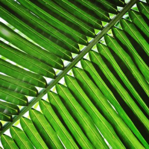 Nature Palm Detail 1 - Photography