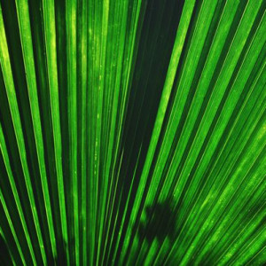 Nature Palm Detail 2 - Photography