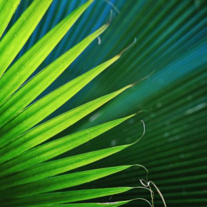 Nature Palm Detail 3 - Photography