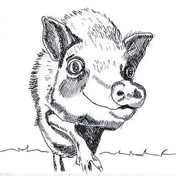 Funky Pig - Pen Drawing