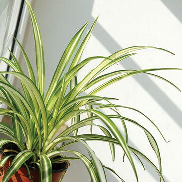 House Plants that Improve Air Quality