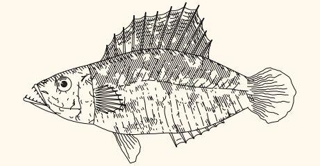 GitHub - LingDong-/fishdraw: procedurally generated fish drawings