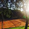 Alex Tennis