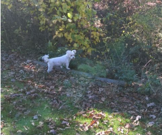 white small dog by trees