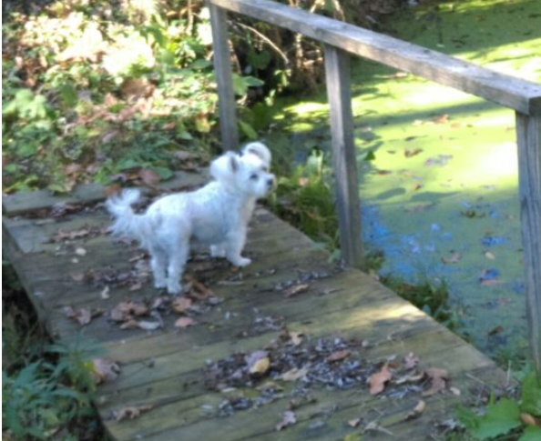 white small dog by green pond