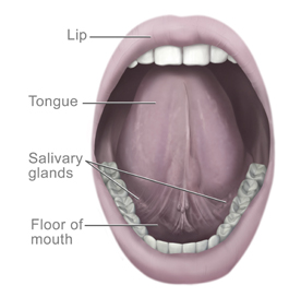 This Picture Shows The Area Under The Tongue.