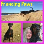 Prancing Paws Newcastle