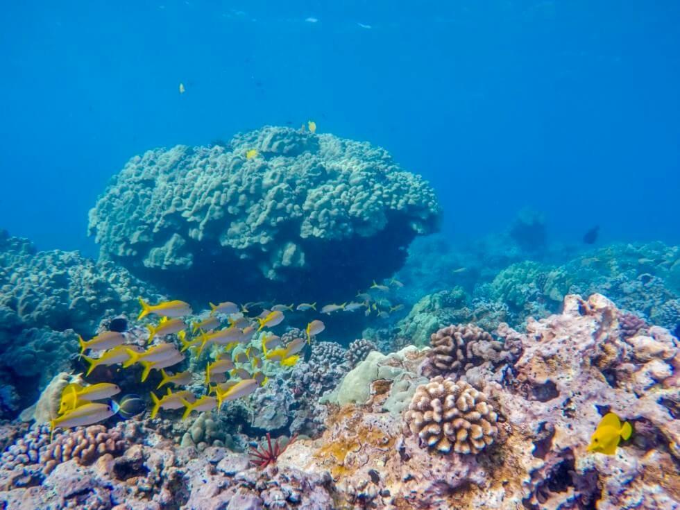 這種小黃魚也很多,很有熱帶氣息。來源