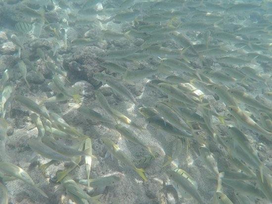 剛下水就能看到非常多這種銀色的魚。來源