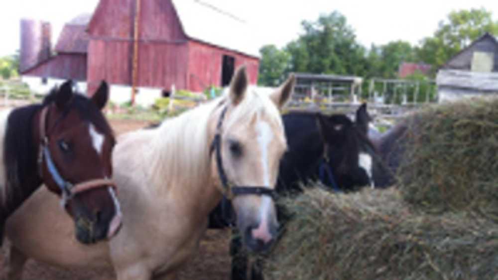 Outrider Horseback Riding - Photo 1