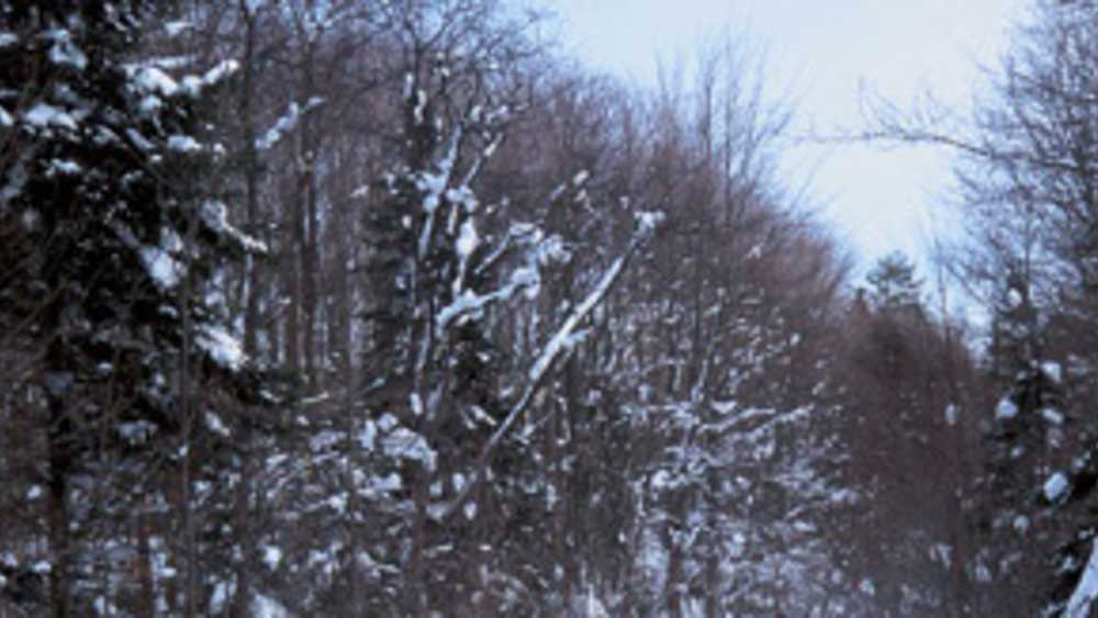 Valley Spur Ski Trail - Photo 1