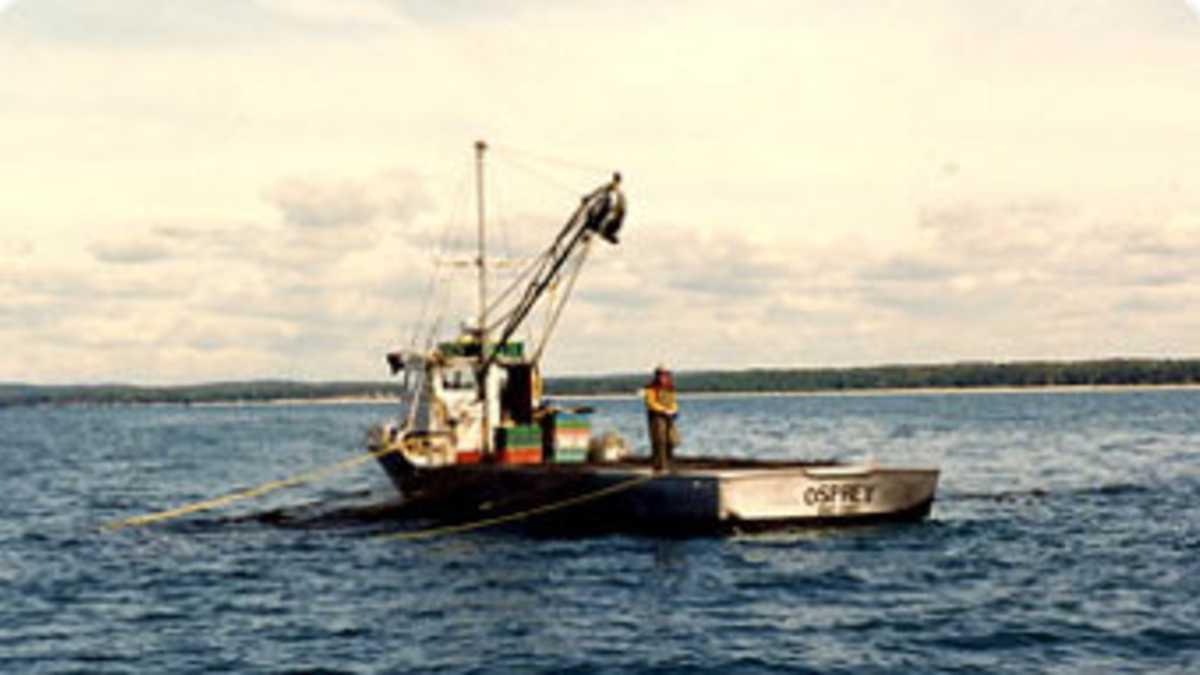 Bay port fish company michigan for Fish store bayport