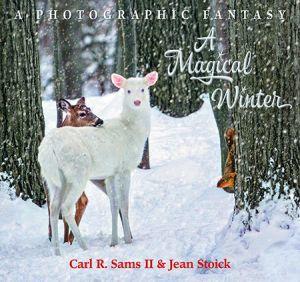 Award-Winning Children's book — A Magical Winter
