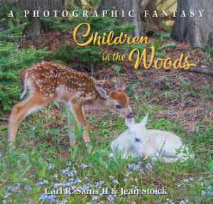 Award-Winning Children's book — Children in the Woods