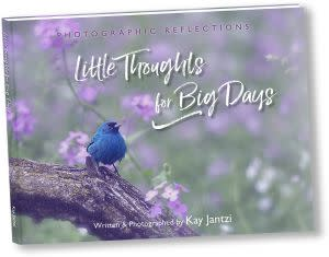 Award-Winning Children's book — Little Thoughts for Big Days