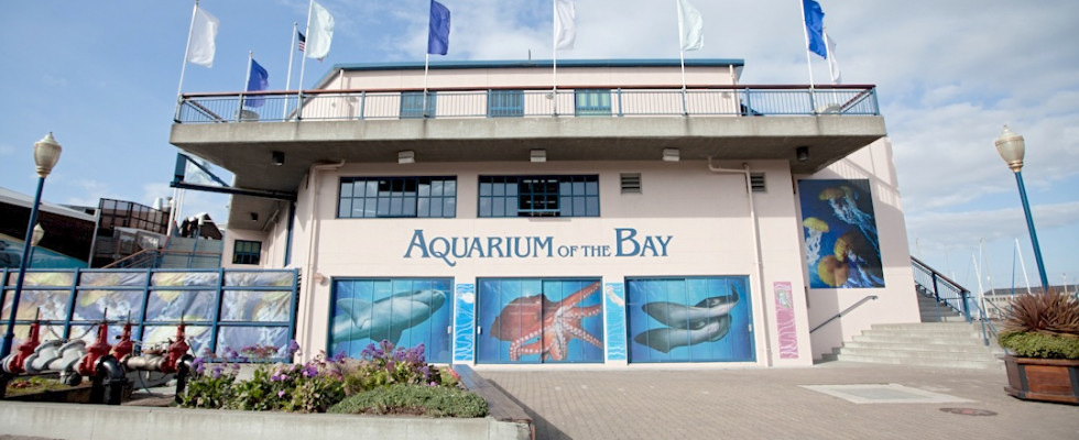 Must Do Aquarium By The Bay On San Francisco 39 S Pier 39