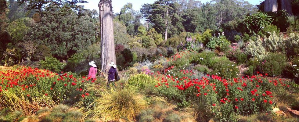 Mommy Nearest Must Do San Francisco Botanical Garden