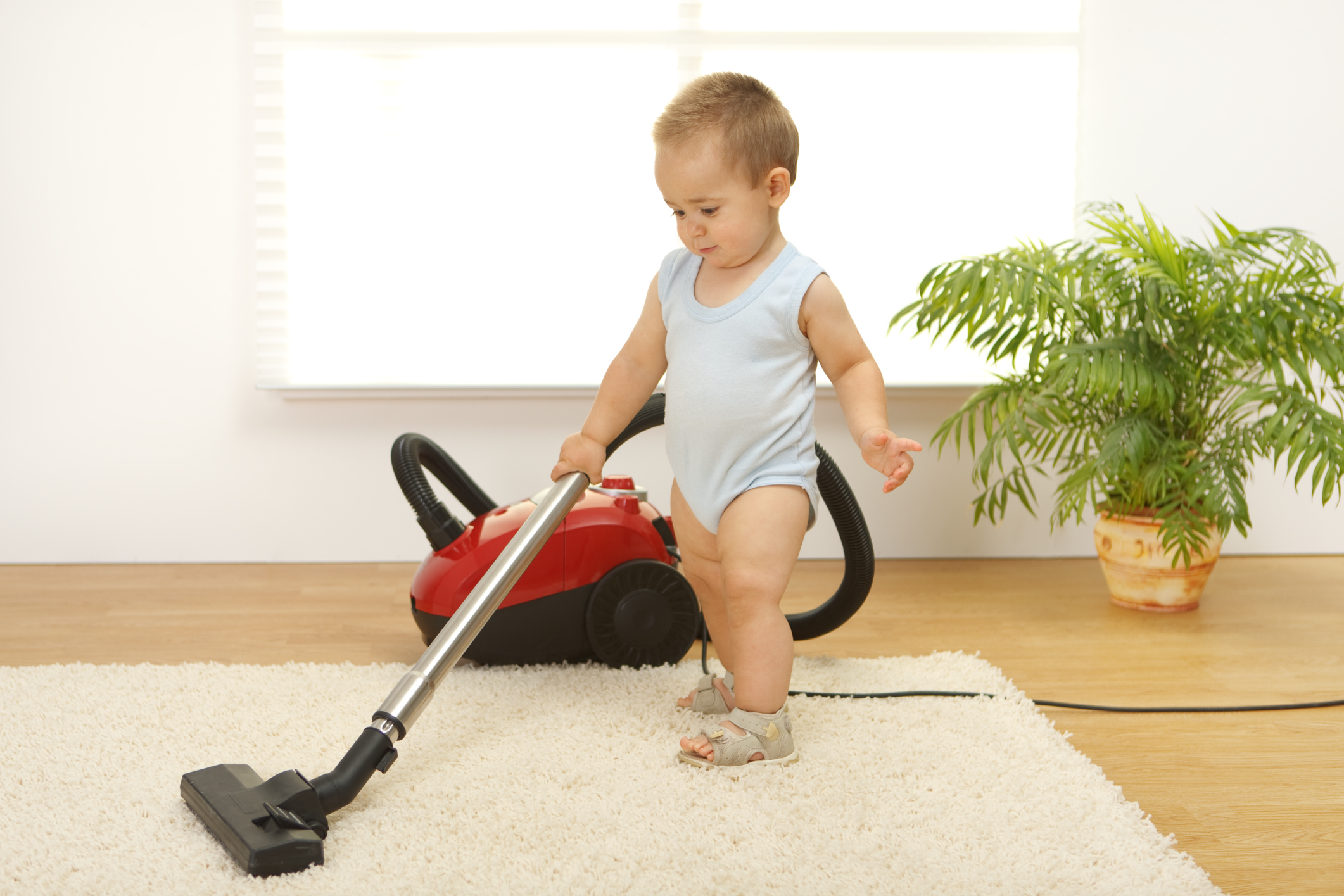 We clean the carpet at home: how to use 48