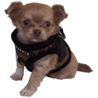 Puppia Soft Camo Jacket Dog Harness