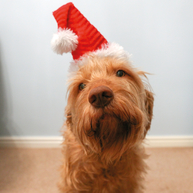Rosewood Christmas Santa Hat for Dogs