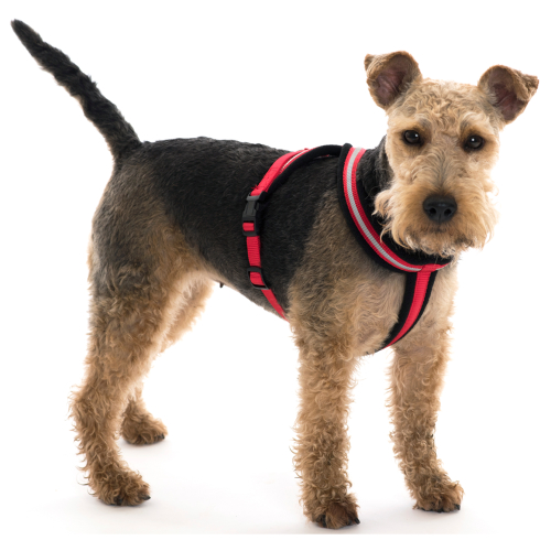 Halti Comfy Harness Red