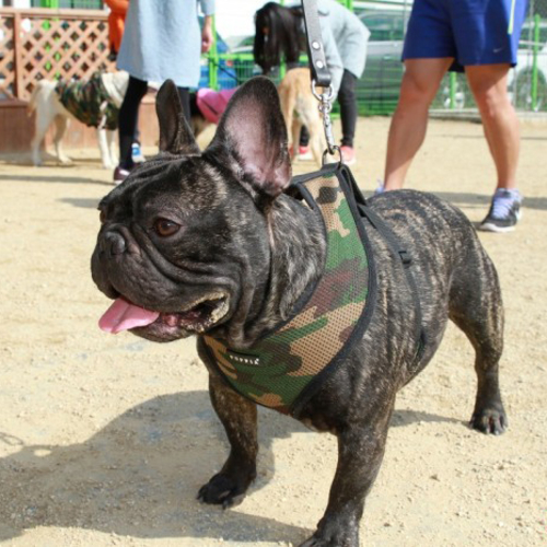 Puppia Soft Camo Dog Harness