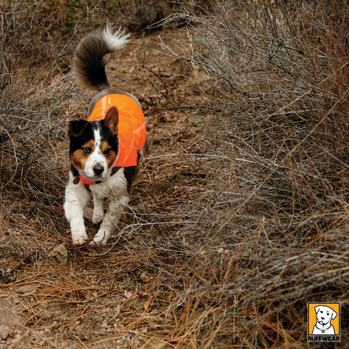Ruffwear Track High Visability Reflective Dog Jacket