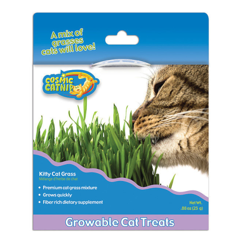 Cosmic Catnip Kitty Grass