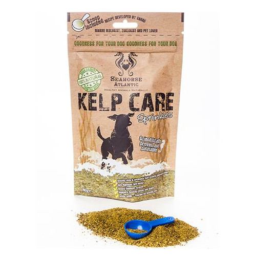 Seahorse Atlantic Kelp Care For Dog
