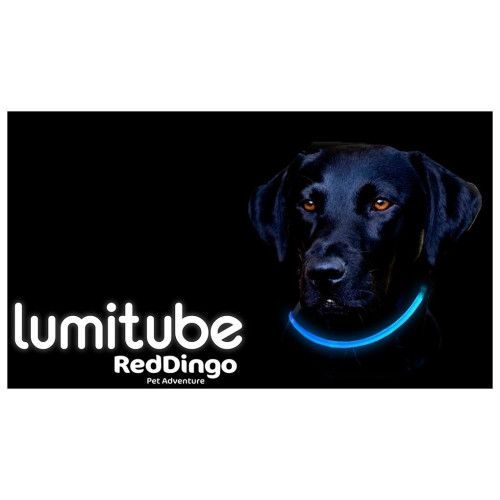 Red Dingo Lumitube Light Up Dog Collar