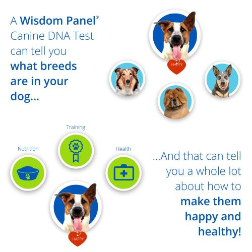 Wisdom Panel 2.0 Dog DNA Testing Kit