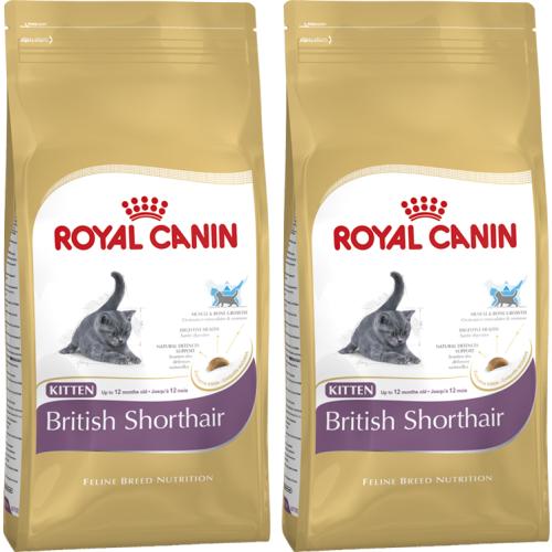 royal canin breed nutrition british shorthair kitten food. Black Bedroom Furniture Sets. Home Design Ideas